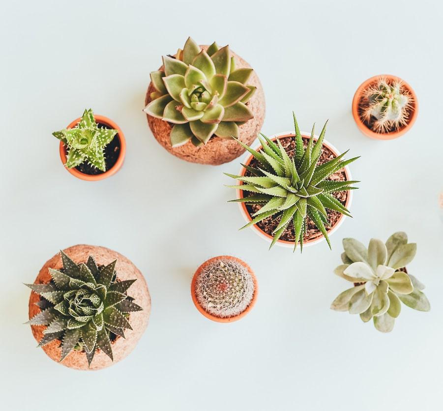 Photo illustrative de cactus